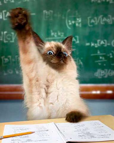 cat-raising-hand.jpg