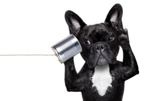 listening-dog